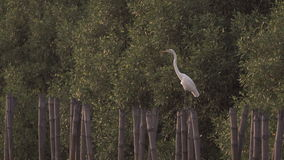 Tranquil bird perches on bamboo stump stock video footage