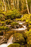 Tranquil Brook Royalty Free Stock Image