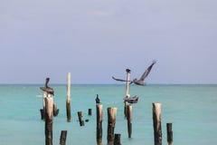 Tranquil Caribbean Beach Stock Image
