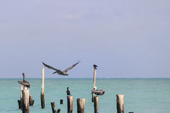 Tranquil Caribbean Beach Royalty Free Stock Photo