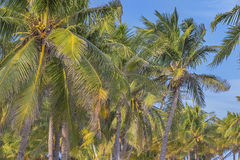 Tranquil Caribbean Beach Stock Images