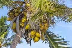 Tranquil Caribbean Beach Stock Photos