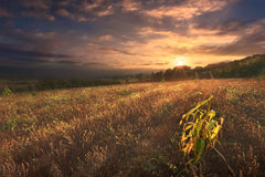 Tranquil countryside scene at autumn sunrise Royalty Free Stock Image