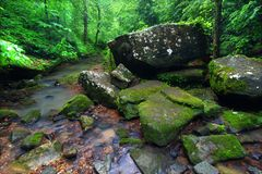 Tranquil Creek Scene in Alabama Royalty Free Stock Image