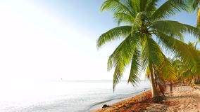 Tranquil Daylight High Key Scene from the Beach. Look at a beach with a palm tree and seaweed in the sand stock footage