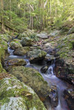 Tranquil Forest Creek Royalty Free Stock Photos