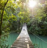 Tranquil Forest Footbridge. Bridge over river in tranquil forest in Belize stock photography