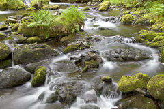 Tranquil forest stream. Flowing over rocks stock photos