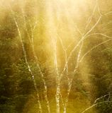 Tranquil Forest Tree Background Royalty Free Stock Photo