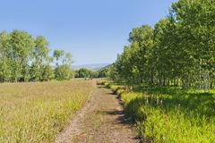 A tranquil  green country scene with a path leading through the grass field surrounded by trees Stock Photos