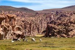 Serene green landscape with alpacas and llamas, geological rock formations on Altiplano, Andes of Bolivia, South America. Tranquil green landscape with alpacas stock photo