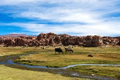 Serene green landscape with alpacas and llamas, geological rock formations on Altiplano, Andes of Bolivia, South America. Tranquil green landscape with alpacas stock image