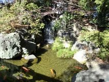 Tranquil koi pond Stock Photo