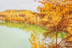 Tranquil lake. Beautiful bright autumn background. Yellow trees in enchanting forest. Leaves fall from branches on sunny autumn da royalty free stock image