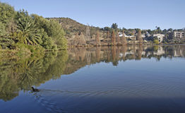 Tranquil Lake. A tranquil lake at Gillooly's farm in Greater Johannesburg, South Africa, with housing complex in the distance Royalty Free Stock Images