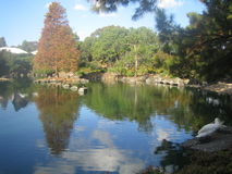 Tranquil lake at the Japanese Gardens Sydney Royalty Free Stock Image