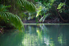 Tranquil lake with lush tropical vegetation Royalty Free Stock Image