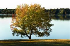A tranquil lakeside view Royalty Free Stock Photos