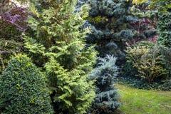 The tranquil landscape of an evergreen garden: boxwood Buxus sempervirens. Thuja occidentalis Aurea, Juniperus squamata Ð'lue carpet, Pinus parviflora royalty free stock photo