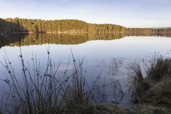 Tranquil Loch Garten and Caledonian Forest at Abernethy in the Highlands of Scotland. Tranquil Loch Garten and Caledonian Forest in the Cairngorms National Park royalty free stock images
