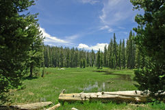 Tranquil Meadow. Near Lake Tahoe, CA royalty free stock photos