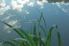 Tranquil Morning. Clouds reflecting on the surface of a peaceful lake in the morning Royalty Free Stock Images