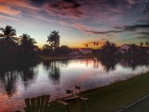 A tranquil morning in Florida. Palm trees line a canal on a peaceful morning in Florida, ducks Stock Photos