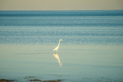 Tranquil nature in florida keys Royalty Free Stock Photography