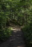 Tranquil Path winding through a scenic wooded area. On the north shore of minnesota royalty free stock photos