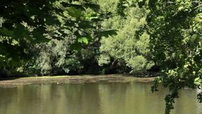 Tranquil peaceful river view. The river peacefully flowing amidst the greenery on a summer day stock footage