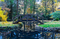 Tranquil pond in an autumn forest in the Dandenong Ranges, Australia Royalty Free Stock Images