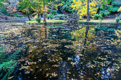 Tranquil pond in an autumn forest in the Dandenong Ranges, Australia Royalty Free Stock Photo