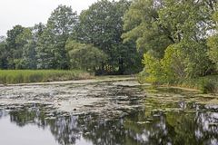 Tranquil pond in Eastern Canada Royalty Free Stock Photos