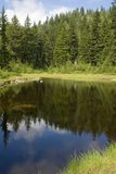 Tranquil pond in the forest Stock Photos