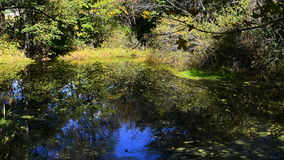 Tranquil pond scene. Peaceful pond in a forest stock video footage