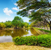 Tranquil pond in summer park Royalty Free Stock Photos