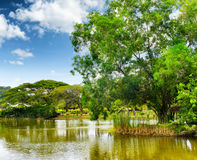 Tranquil pond in summer park Stock Photo