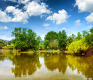 Tranquil pond in summer park Royalty Free Stock Photo