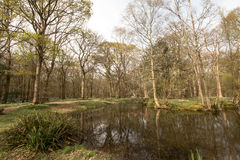 Tranquil pond in Sussex Wood Stock Images