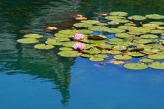 Tranquil Reflections Royalty Free Stock Images