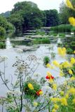 Tranquil river scene at Ferndown, Dorset. River Stour at Ferndown, Dorset with wild flower colors Stock Photography