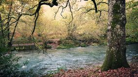 Tranquil River In Woods. Full river flows through deciduous woodland stock video footage