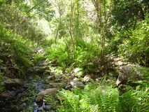 Tranquil Rivier in a Forrest Background stock photography