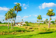 Tranquil rural landscape, small on Cuba Stock Image