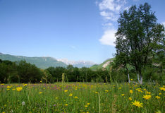 Tranquil rural scene with meadow and mountains Stock Photography