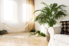 Tranquil sand living room. With hammock, couch, widnow and plant royalty free stock images