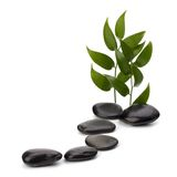Tranquil scene. Green leaf and stones isolated on white background Royalty Free Stock Photography