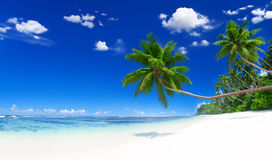 Tranquil Scene Beach with Palm Tree Stock Photo