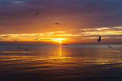 Tranquil scene cloudy sea sunset with seagulls flying at sunset. Stock Image