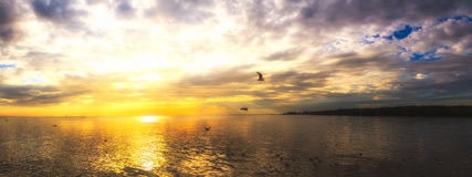 Tranquil scene cloudy sea sunset with seagulls flying at sunset. Royalty Free Stock Photo